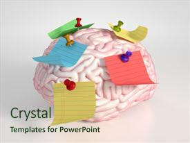 PPT theme featuring brain and colored stickers background and a soft green colored foreground