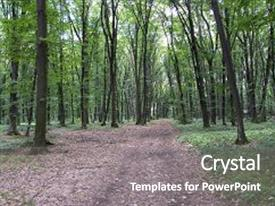 Audience pleasing PPT layouts consisting of bright green forest natural walkway in sunny day light sunshine forest trees sun through vivid green forest peaceful forest trees with sunlight forest in light summer forest green forest nature backdrop and a gray colored foreground.