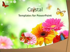 Cool new PPT layouts with butterfly - colored gerberas flowers with exotic backdrop and a soft green colored foreground.