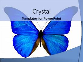 Beautiful PPT theme featuring butterfly isolated on white butterfly backdrop and a light blue colored foreground.