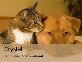 audience pleasing ppt layouts consisting of cat and dog resting together backdrop and a coral colored