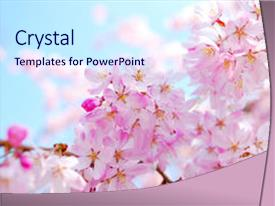 Top Cherry Blossom PowerPoint Templates, Backgrounds, Slides