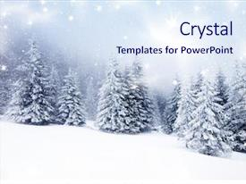 Slide set consisting of christmas background with snowy fir background and a sky blue colored foreground