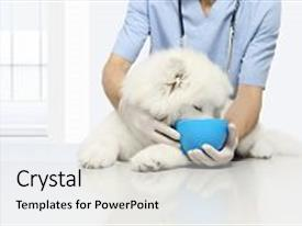 Clinical powerpoint templates ppt themes with clinical backgrounds ppt theme consisting of clinically tested products veterinary examination background and a light gray colored foreground toneelgroepblik Choice Image