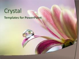 PPT theme having close up of flower petals background and a soft green colored foreground.