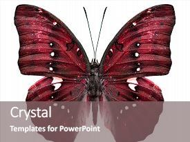 Cool new PPT theme with close up of red butterfly backdrop and a gray colored foreground