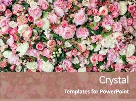 Theme consisting of closeup image of beautiful flowers background and a coral colored foreground