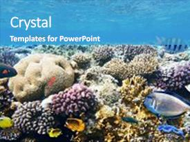 Audience pleasing PPT layouts consisting of colorful coral reef fishes of backdrop and a teal colored foreground