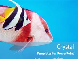 Amazing theme having colorful fish in an aquarium backdrop and a teal colored foreground.