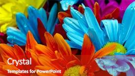 Colorful presentation design enhanced with colorful flowers against a black backdrop and a crimson colored foreground