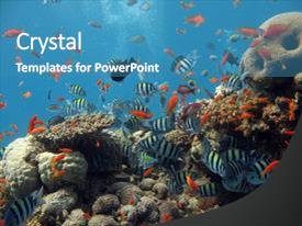 5000 coral reef powerpoint templates w coral reef themed backgrounds