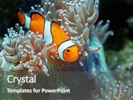Cool new PPT theme with underwater - corals and tropical fish backdrop and a dark gray colored foreground.