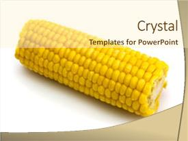 5000 corn cob powerpoint templates w corn cob themed backgrounds