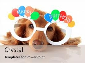 Presentation featuring dachshund puppy wearing happy birthday glasses also available in vertical background and a mint green colored foreground.