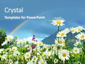 PPT layouts featuring daisies with colorful rainbow background and a teal colored foreground.