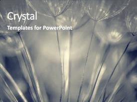 Cool new PPT layouts with design - dandelion flower background abstract natural backdrop and a gray colored foreground.