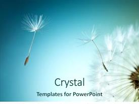 PPT theme consisting of dandelion on natural background background and a cool aqua colored foreground
