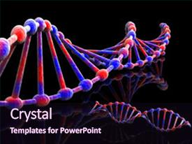 Colorful slides enhanced with dna strands in red and blue on black backdrop and a wine colored foreground