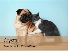 Cat Dog Powerpoint Templates W Cat Dog Themed Backgrounds