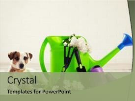 PPT layouts featuring dog watering can shovel background and a  colored foreground.