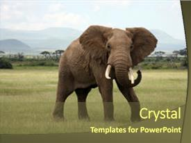 PPT layouts featuring elephant in amboseli national park background and a tawny brown colored foreground.