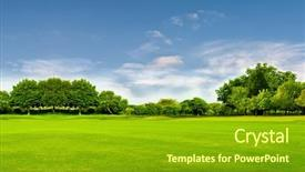 Presentation theme enhanced with environment - green field tree and blue background and a gold colored foreground