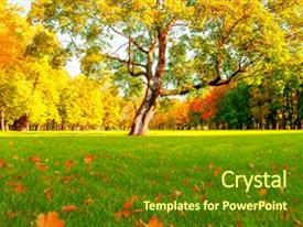 5000 fall powerpoint templates w fall themed backgrounds beautiful ppt theme featuring tree in the park backdrop and a tawny brown toneelgroepblik Choice Image