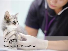 Veterinary powerpoint templates ppt themes with veterinary beautiful theme featuring female veterinary doctor using stethoscope backdrop and a light gray colored foreground toneelgroepblik Choice Image