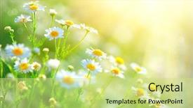 PPT theme with field flowers border beautiful nature background and a yellow colored foreground