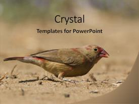 Cool new slides with animal - fire eater - female red-billed backdrop and a coral colored foreground.