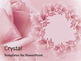 Beautiful presentation theme featuring floral pink-white beautiful background flower composition frame of pink flowers roses on light pink background rose close-up nature backdrop and a lemonade colored foreground.