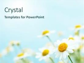 Colorful slide deck enhanced with flower - daisies in the morning backdrop and a cool aqua colored foreground