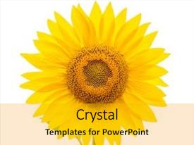 Cool new slides with flower of sunflower isolated backdrop and a gold colored foreground