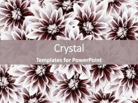 Presentation theme consisting of flowers dahlias white-vinous flowers background and a gray colored foreground.
