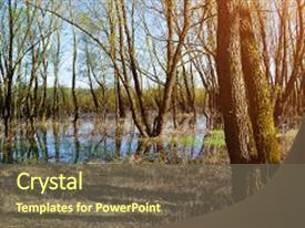 Beautiful PPT theme featuring forest spring landscape - little forest backdrop and a tawny brown colored foreground.