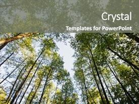 PPT theme consisting of forest summer time nature background and a gray colored foreground.