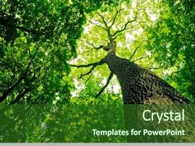 Cool new presentation theme with forest trees nature green wood backdrop and a forest green colored foreground