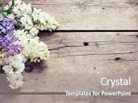 Colorful presentation theme enhanced with fresh aromatic lilac flowers on vintage wooden planks selective focus place for text floral still life toned image backdrop and a gray colored foreground