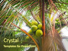 5000 coconut tree powerpoint templates w coconut tree themed presentation theme featuring fresh coconut on the tree background and a tawny brown colored foreground toneelgroepblik Gallery