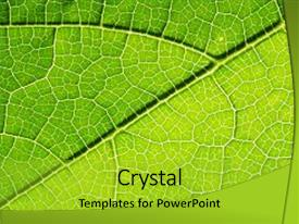 Presentation theme with fresh leaf texture or leaf background and a yellow colored foreground.