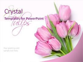 Slide deck with fresh pink tulip flowers bouquet background and a pink colored foreground