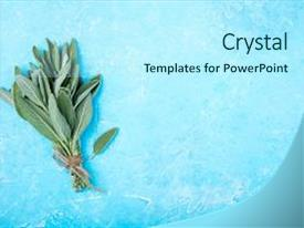 Amazing presentation having garden - fresh sage on blue background backdrop and a arctic colored foreground.