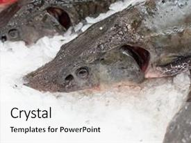 Colorful presentation theme enhanced with frozen ice-cold fish backdrop and a white colored foreground.