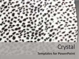 Presentation design featuring fur like leopard panther cheetah background and a light gray colored foreground.