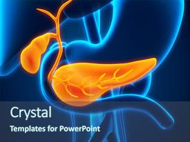 400 anatomy pancreas powerpoint templates w anatomy pancreas cool new ppt layouts with gastrointestinal human gallbladder and pancreas backdrop and a ocean colored toneelgroepblik Gallery