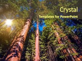 Cool new PPT theme with giant sequoias forest sequoia national backdrop and a tawny brown colored foreground.