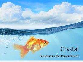 Slides enhanced with gold fish in water mixed background and a light blue colored foreground