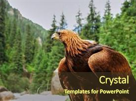 Beautiful presentation theme featuring golden eagle aquila chrysaetos the golden eagle is one of the best-known birds of prey in the northern hemisphere it is the most widely distributed species of eagle backdrop and a tawny brown colored foreground.