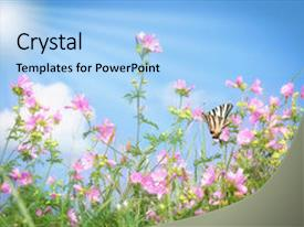 PPT theme having summer meadow with butterfly background and a light blue colored foreground