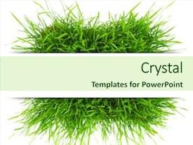 Amazing presentation having grasses - natural banner with fresh grass backdrop and a mint green colored foreground